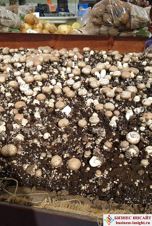 Собери грибы сам на нашей полянке
