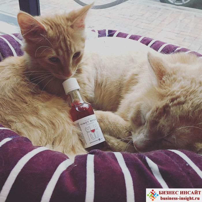 Специальное вино для кошек и котов