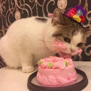 Как отметить день рождения кота