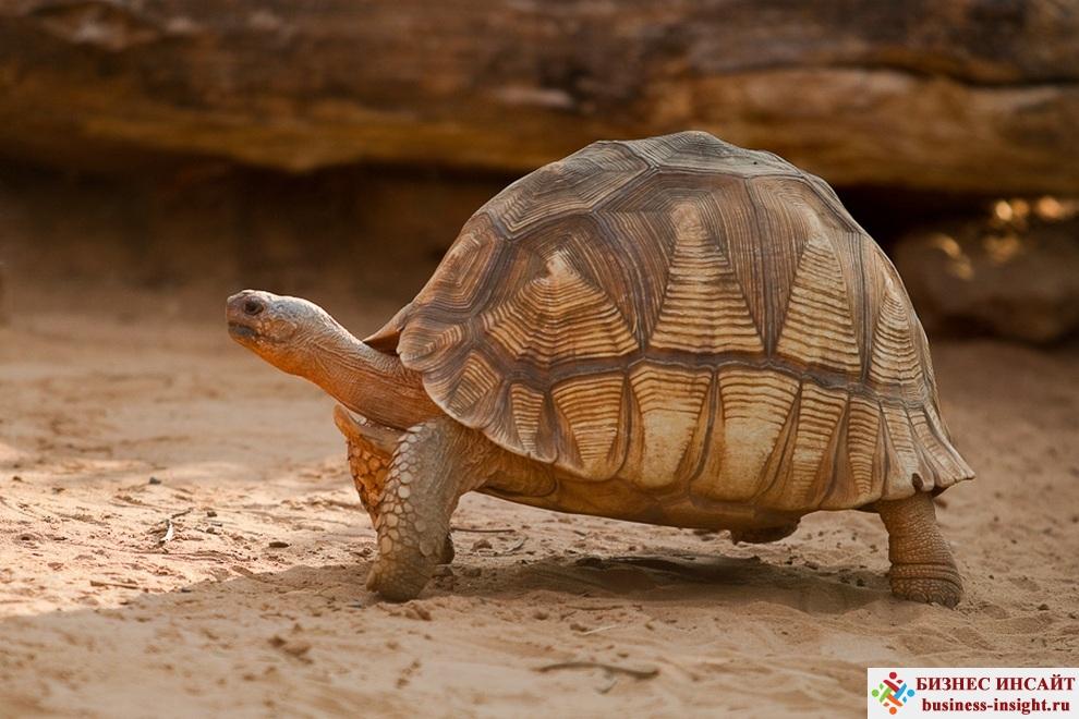 Гравировка на панцире черепахи