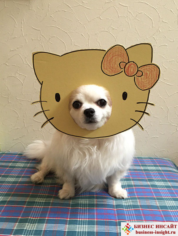 Японская женщина создает забавные фотосессии со своей собачкой