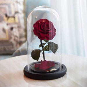 Прекрасные розы, которые никогда не вянут