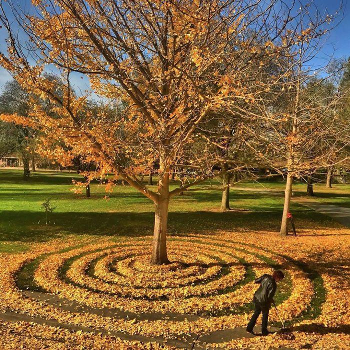 Рисунки из опавших осенних листьев