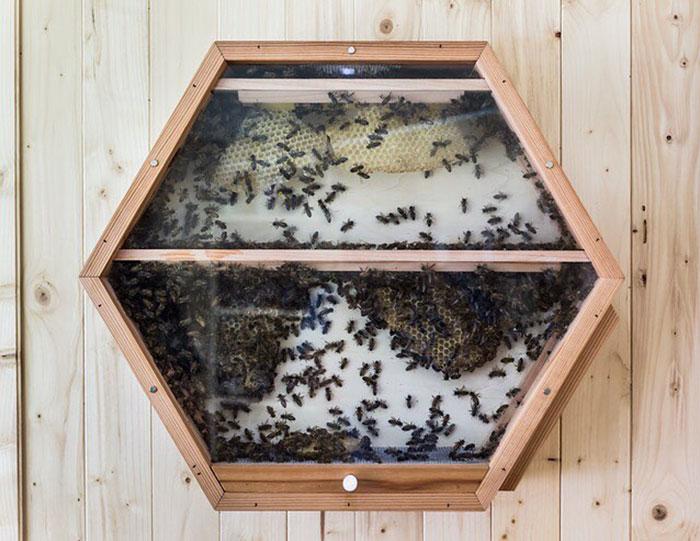 Декоративный пчелиный улей у вас в доме