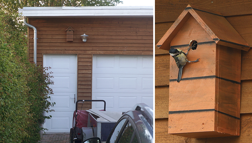 Скворечники для птиц, которые живут в городе